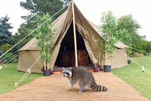 Pengion poo pegs and Glamping Tent Chessington Frank PR