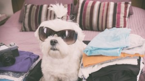Dog glassses