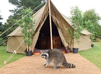 The new Explorer Glamping site at Chessington World of Adventures Resort opened in June.